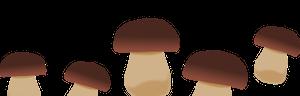 Amici del Fungo Cardoncello